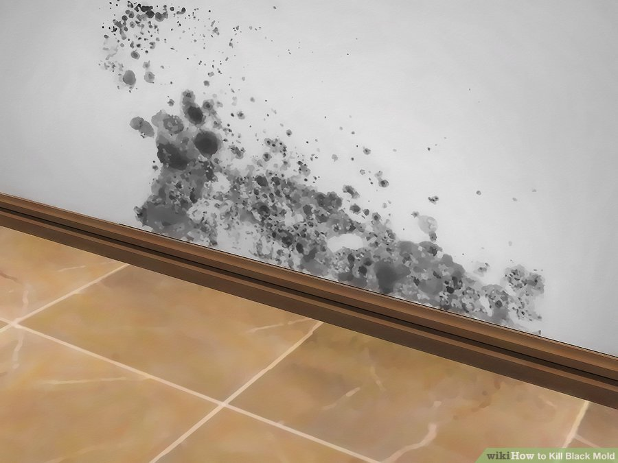 How to Take Precautions Against Mold